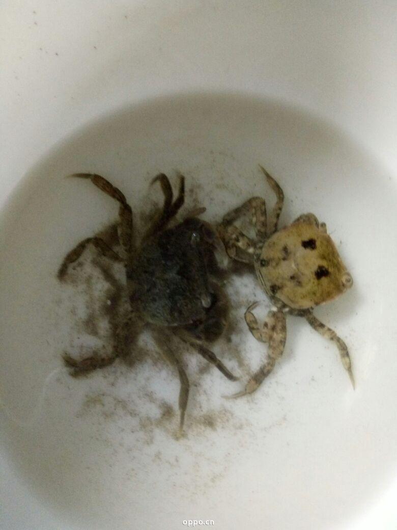 叶子手工制作大全图片小螃蟹