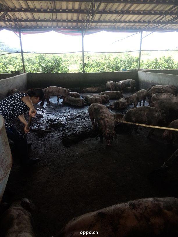 猪场苗族彝族乡地图