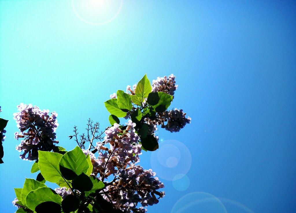 来到梧桐树下,仰视着枝头花团锦簇的淡紫与浅红,立刻得到全身心地抚慰