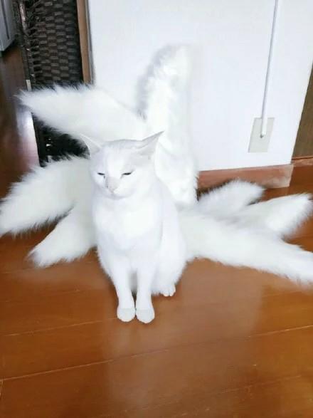 一网友给自家猫咪制作的九尾狐尾巴
