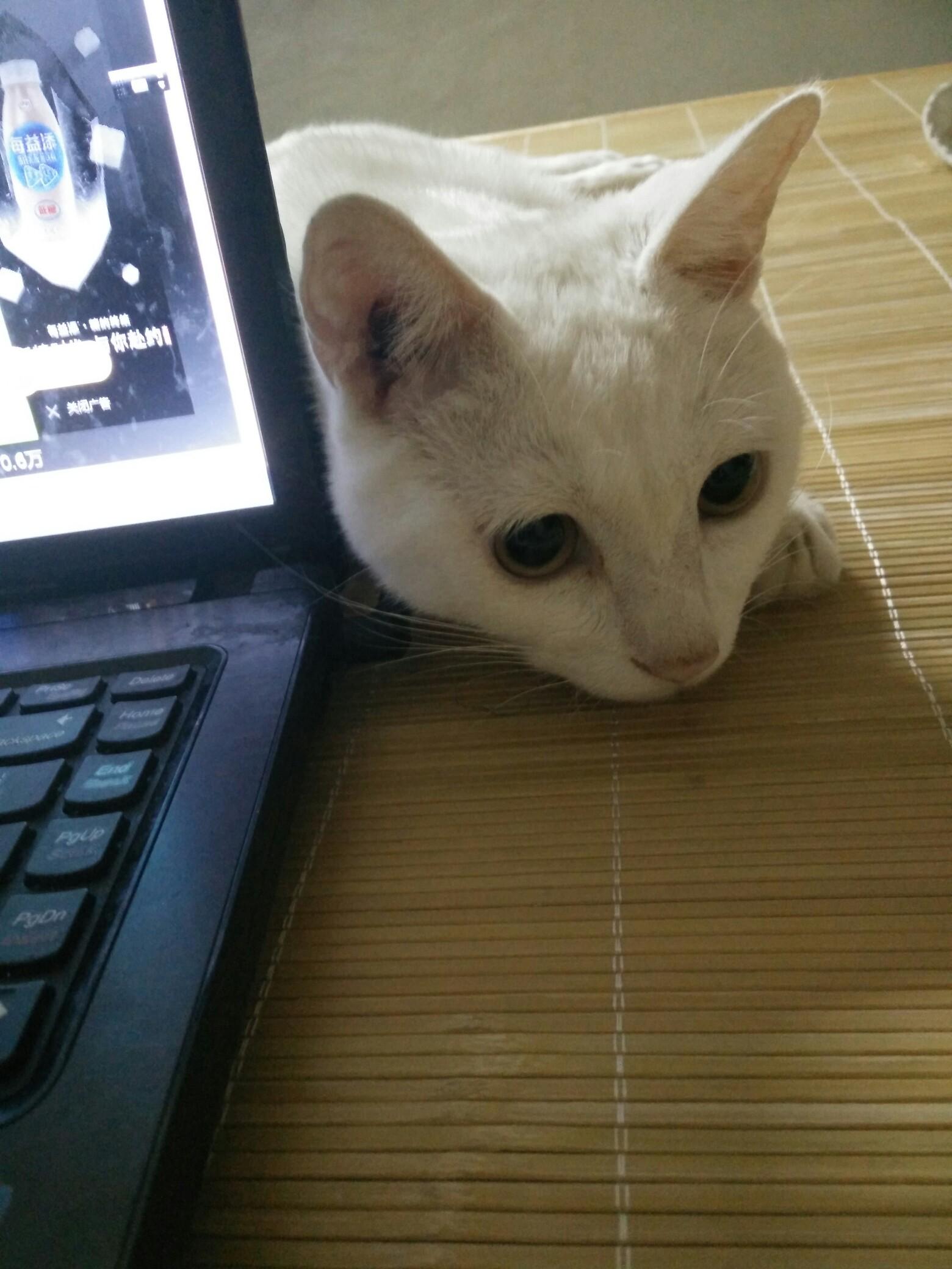 小萌猫成长记_帖子_oppo手机官方社区