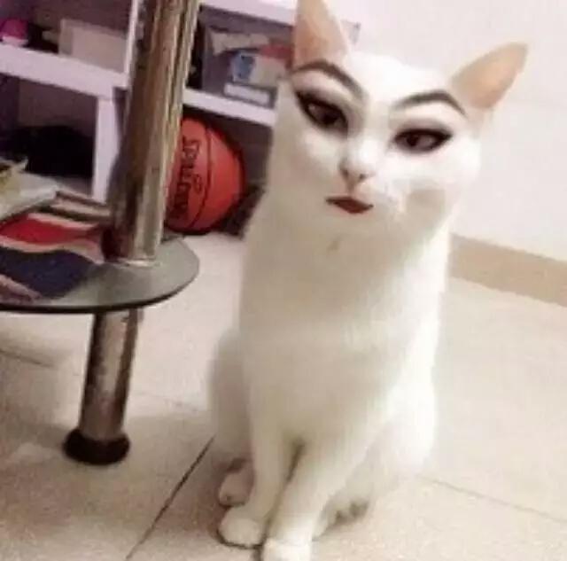 不要给我搞事情猫星人-不要给我搞事情