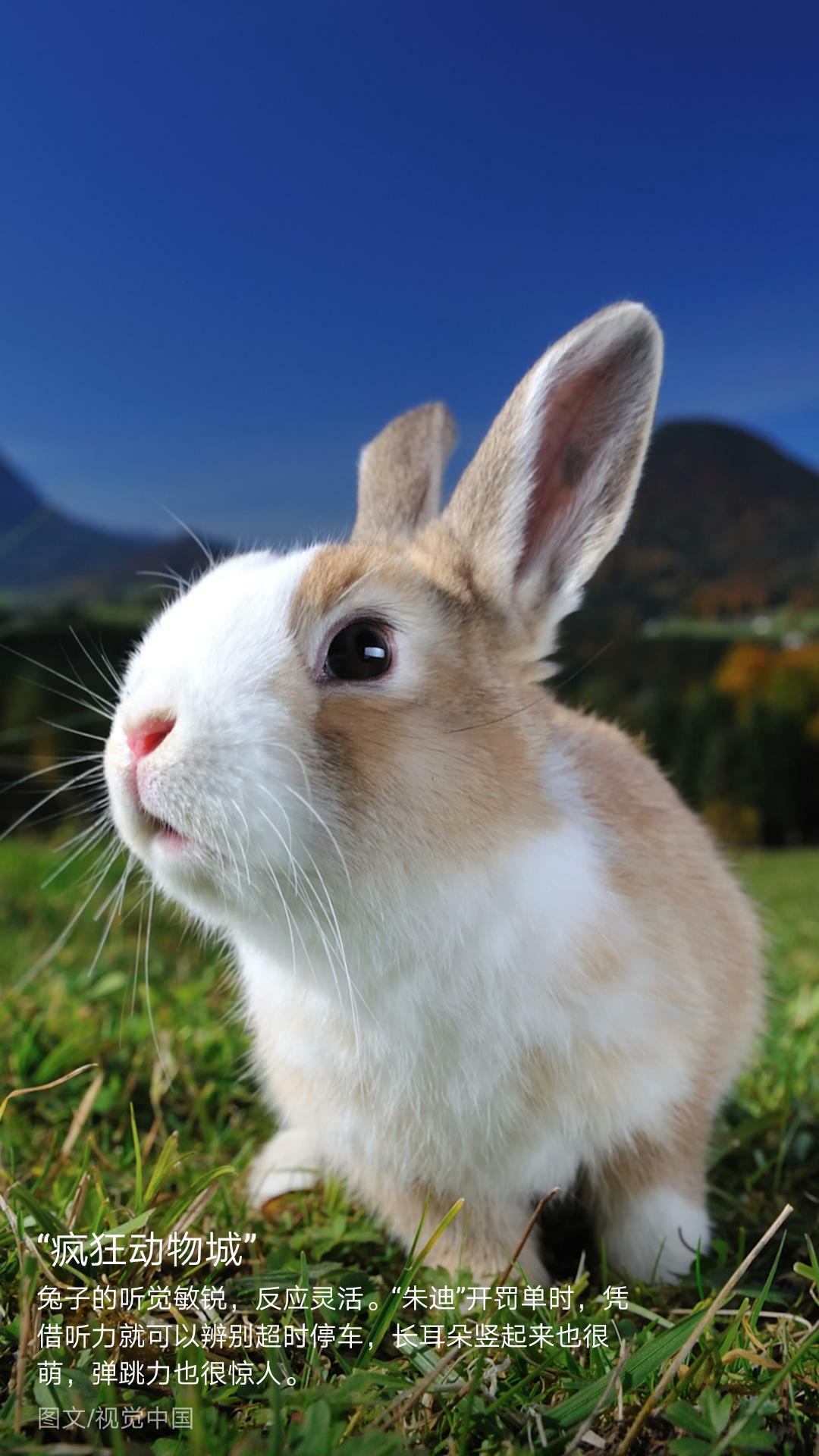 小动物_帖子_oppo手机官方社区