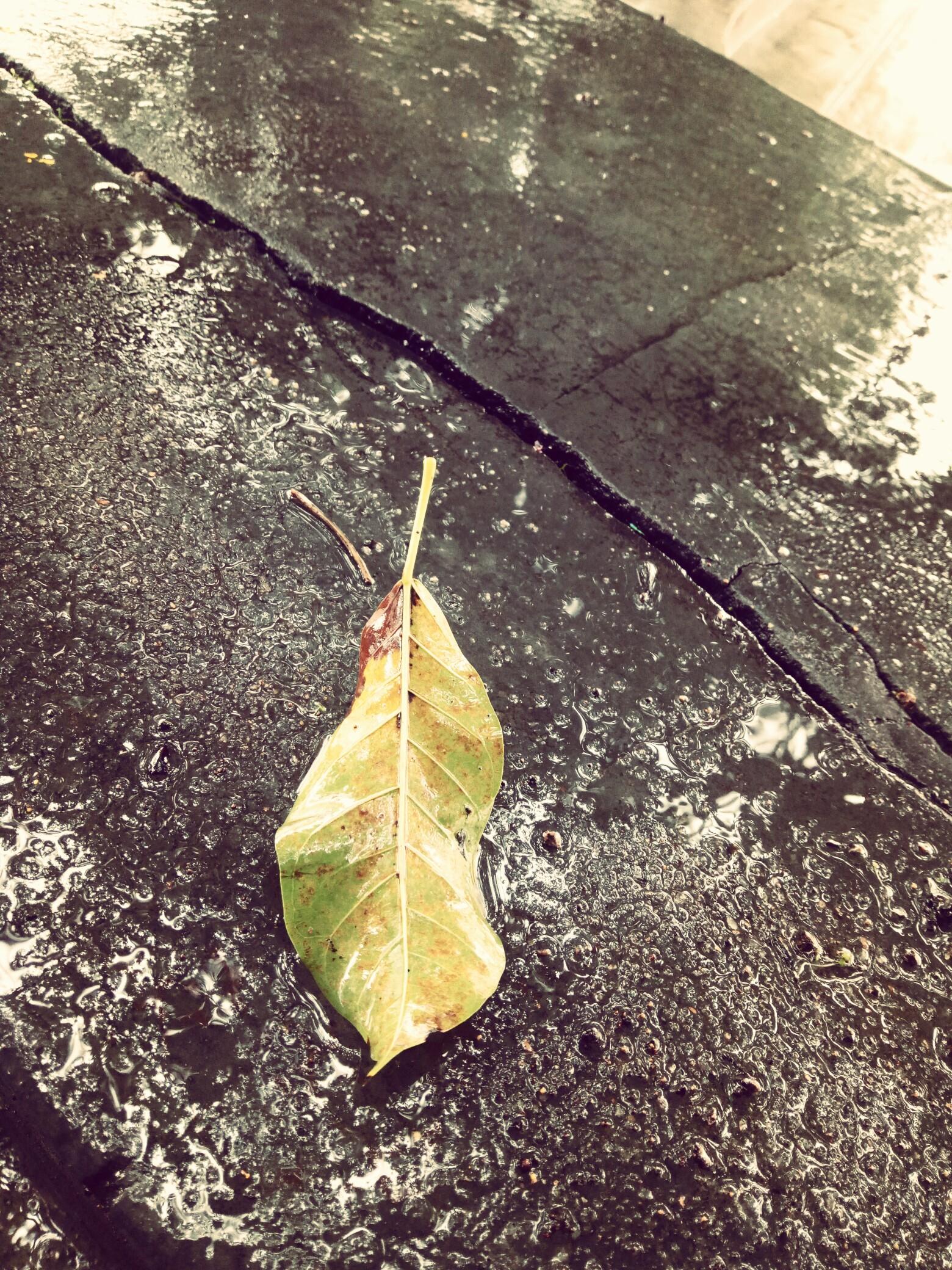 吉他的弹唱冬雨乐谱