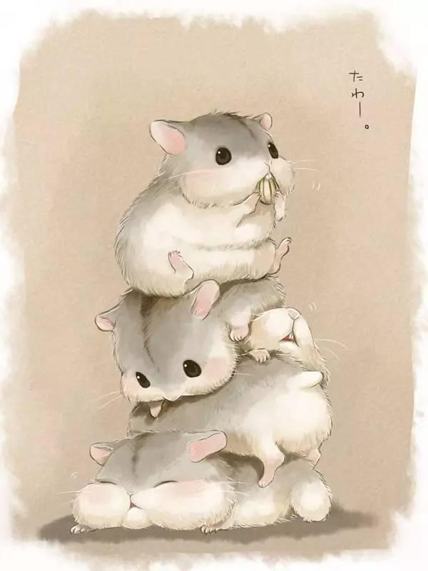 可爱小仓鼠,萌翻你!