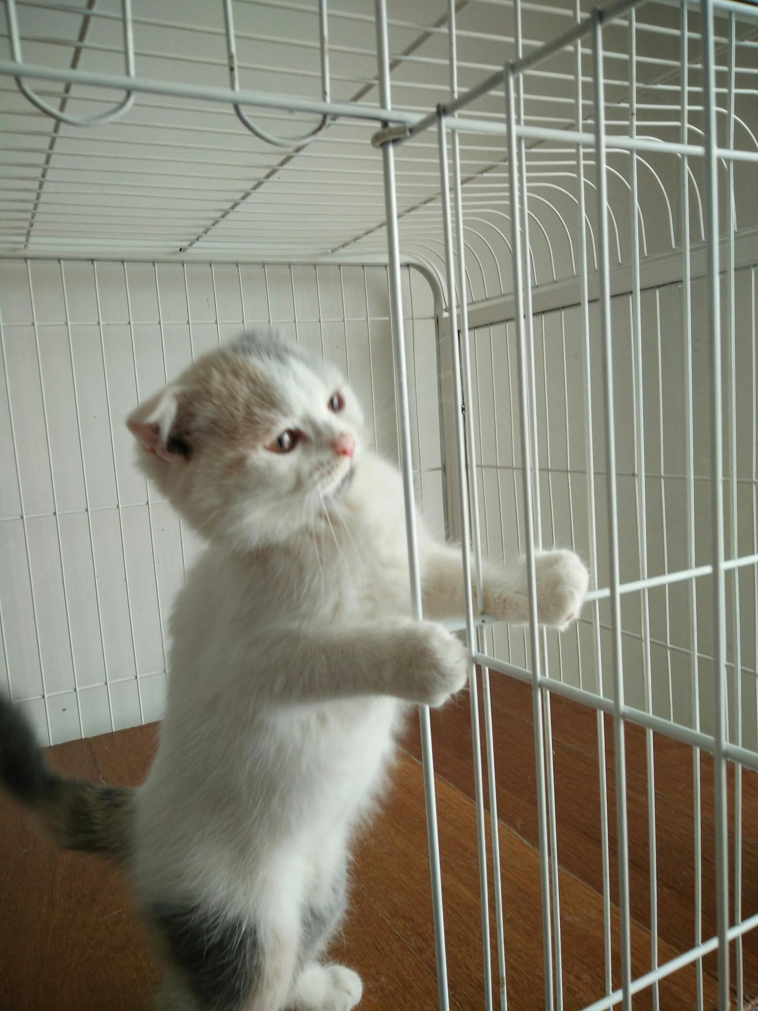 小猫咪手机壁纸-苹果手机屏保图片|麒麟壁纸手机高清