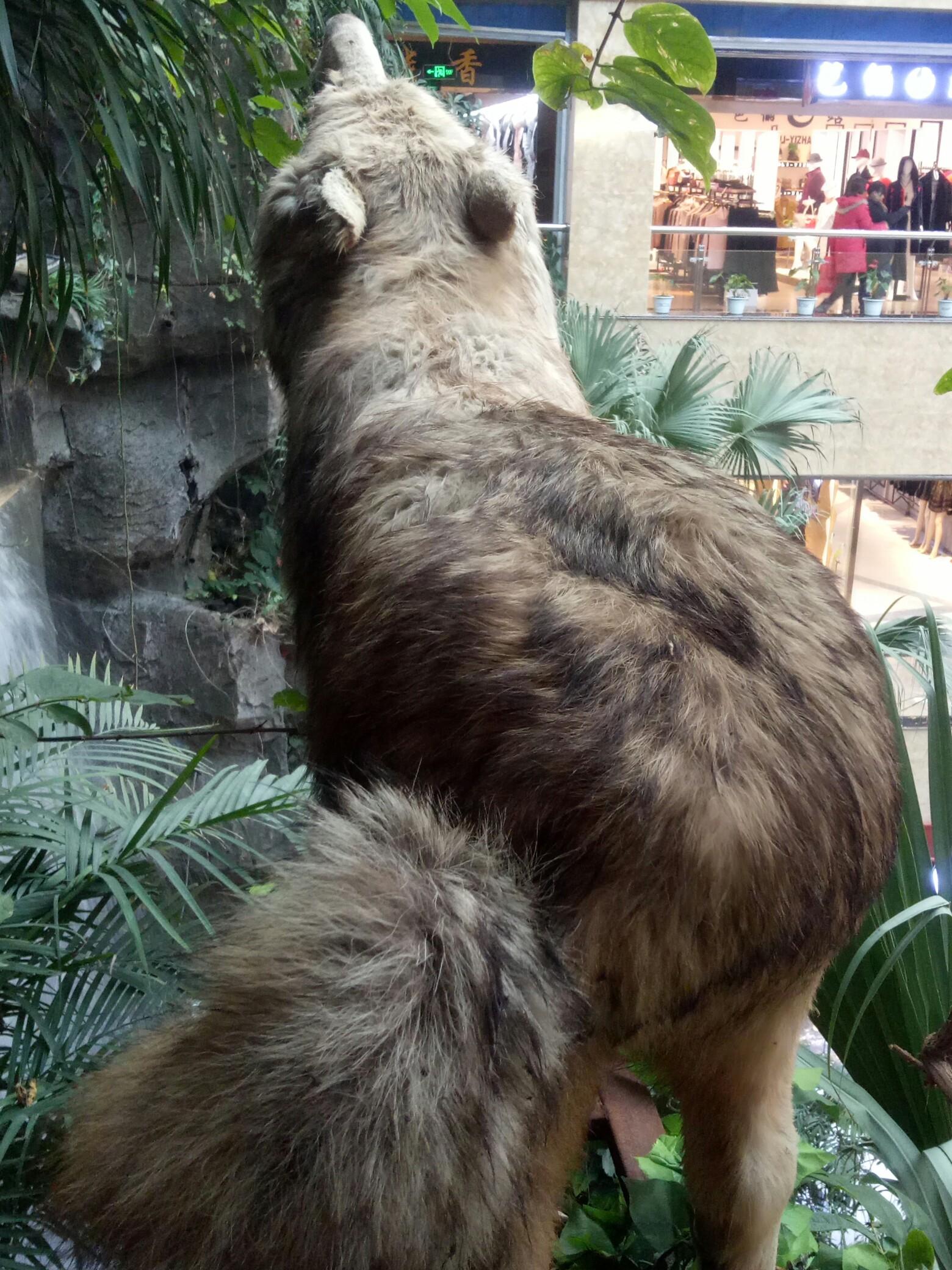 可怜的动物,在商场里面就这样,嗨