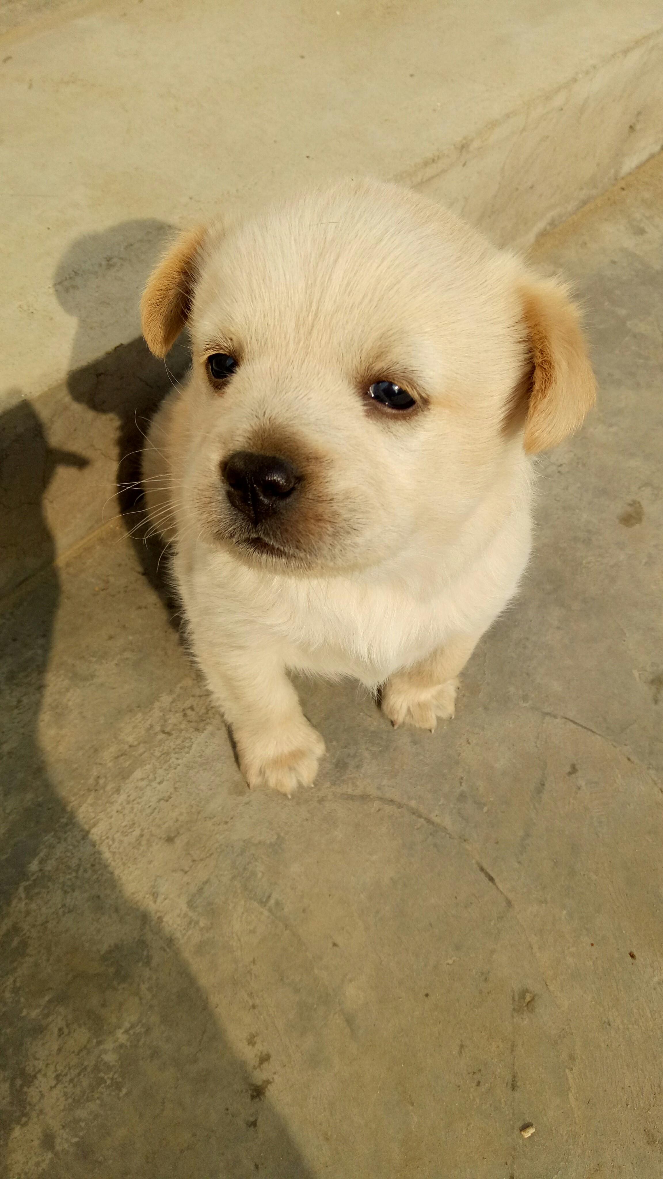 可爱的小狗!_帖子_oppo手机官方社区