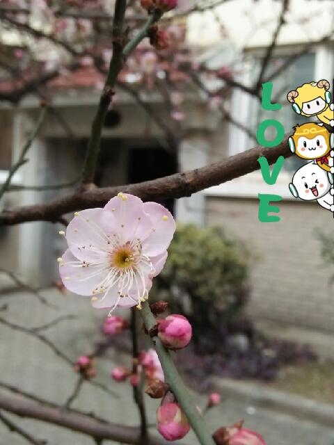 可爱的梅花[表情]_帖子_oppo手机官方社区