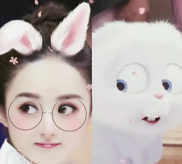 赵丽颖的兔子为什么叫小白 谁起的名字