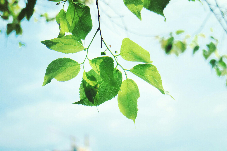 背景 壁纸 绿色 绿叶 树叶 植物 桌面 2880_1920