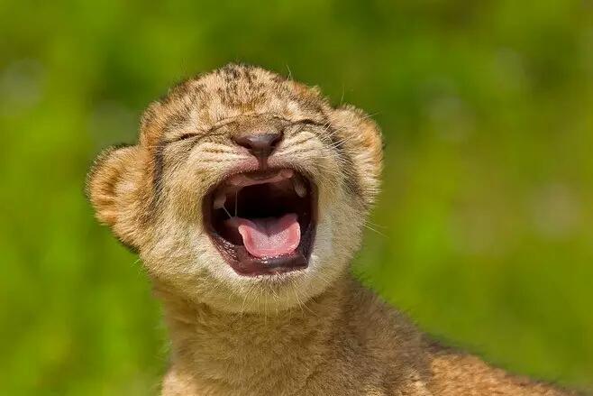 心情不好,进来看看这些动物笑脸!