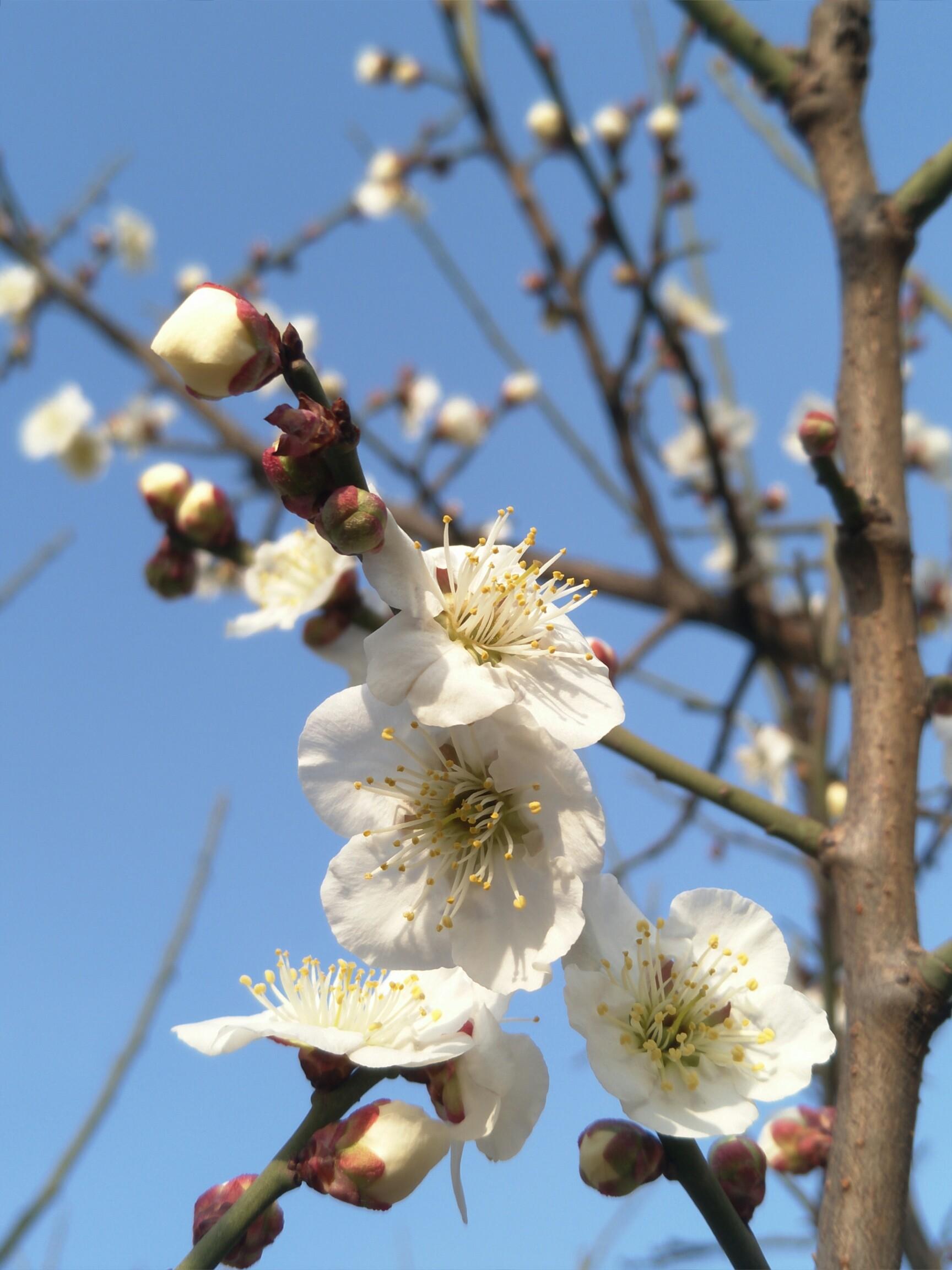 春天在哪里?