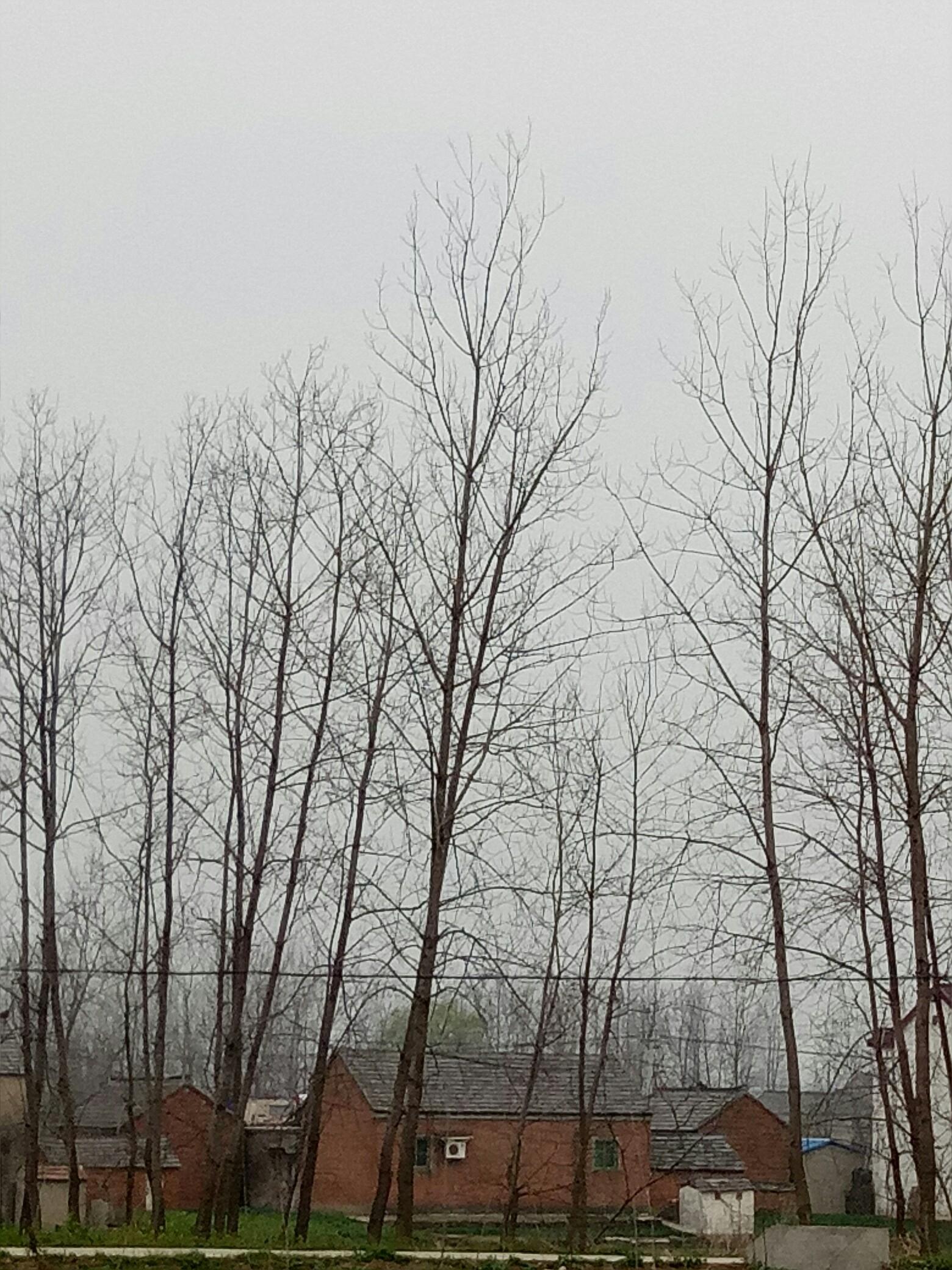 小树苗长成大树不容易!_帖子_oppo手机