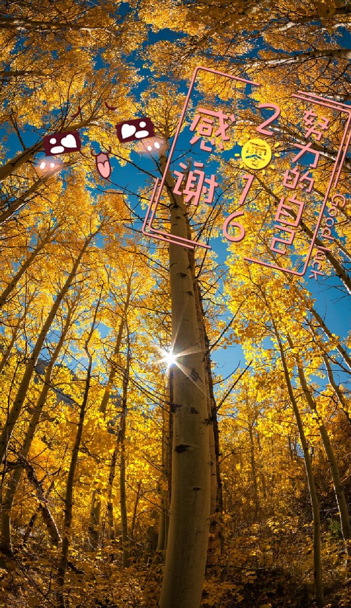 壁紙 風景 森林 桌面 720_1244 豎版 豎屏 手機