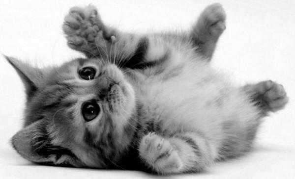 壁纸 动物 猫 猫咪 小猫 桌面 600_365