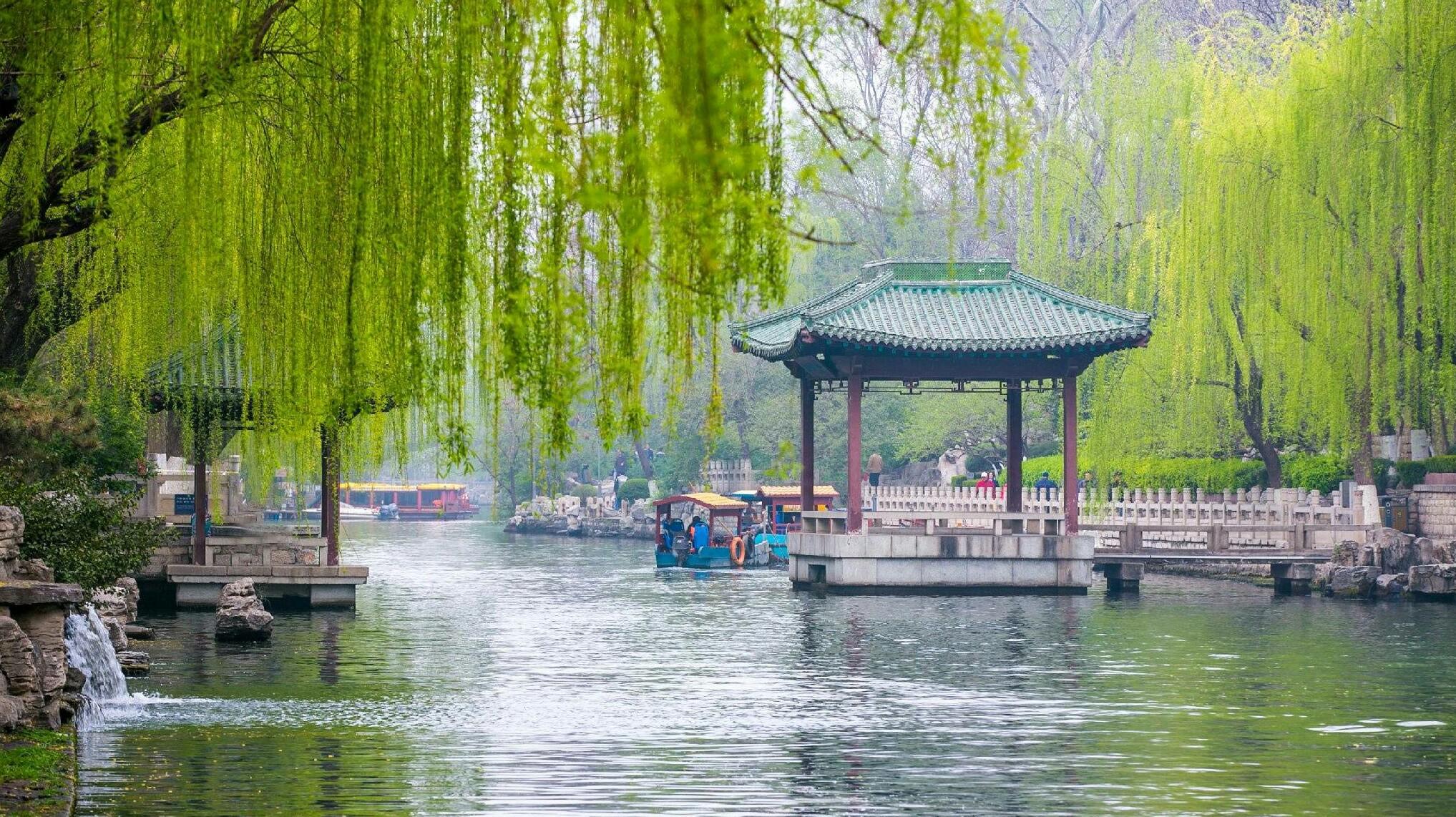 壁纸 垂柳 风景 柳树 摄影 树 桌面 2035_1142