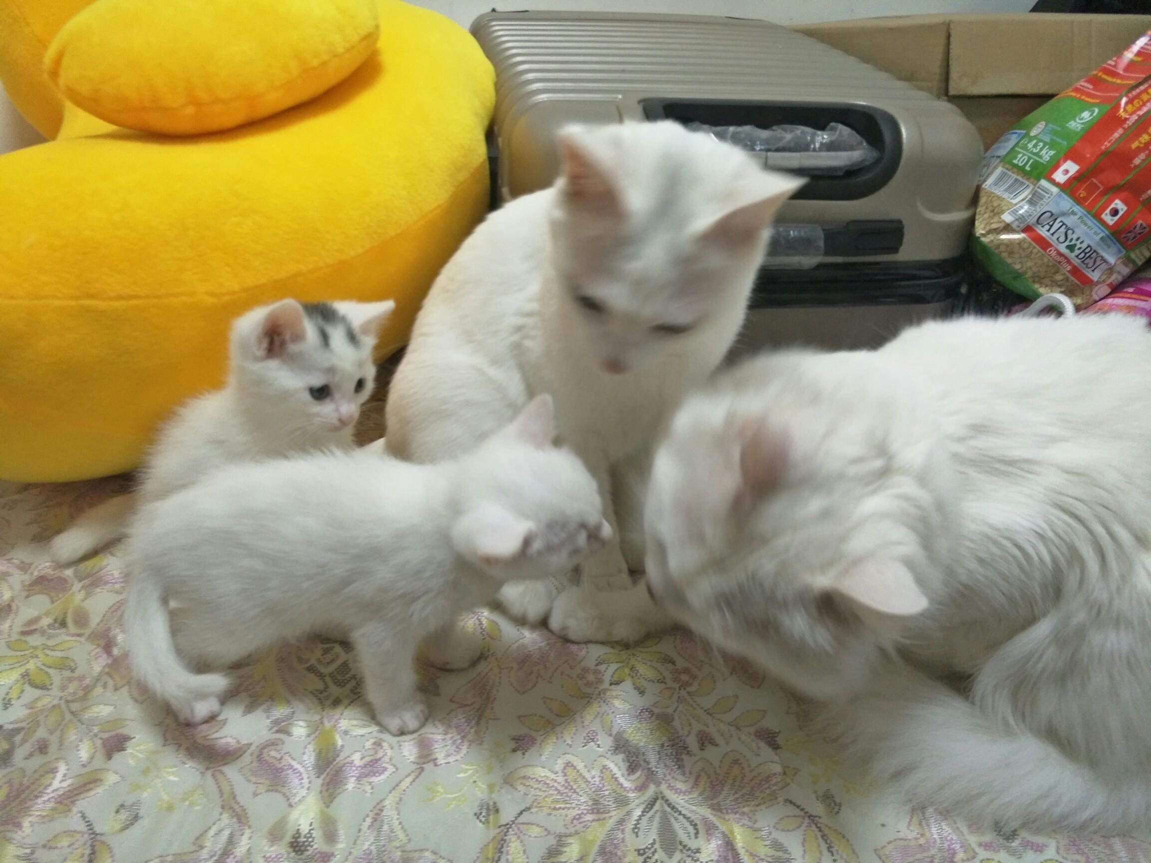 壁纸 动物 猫 猫咪 小猫 桌面 2304_1728