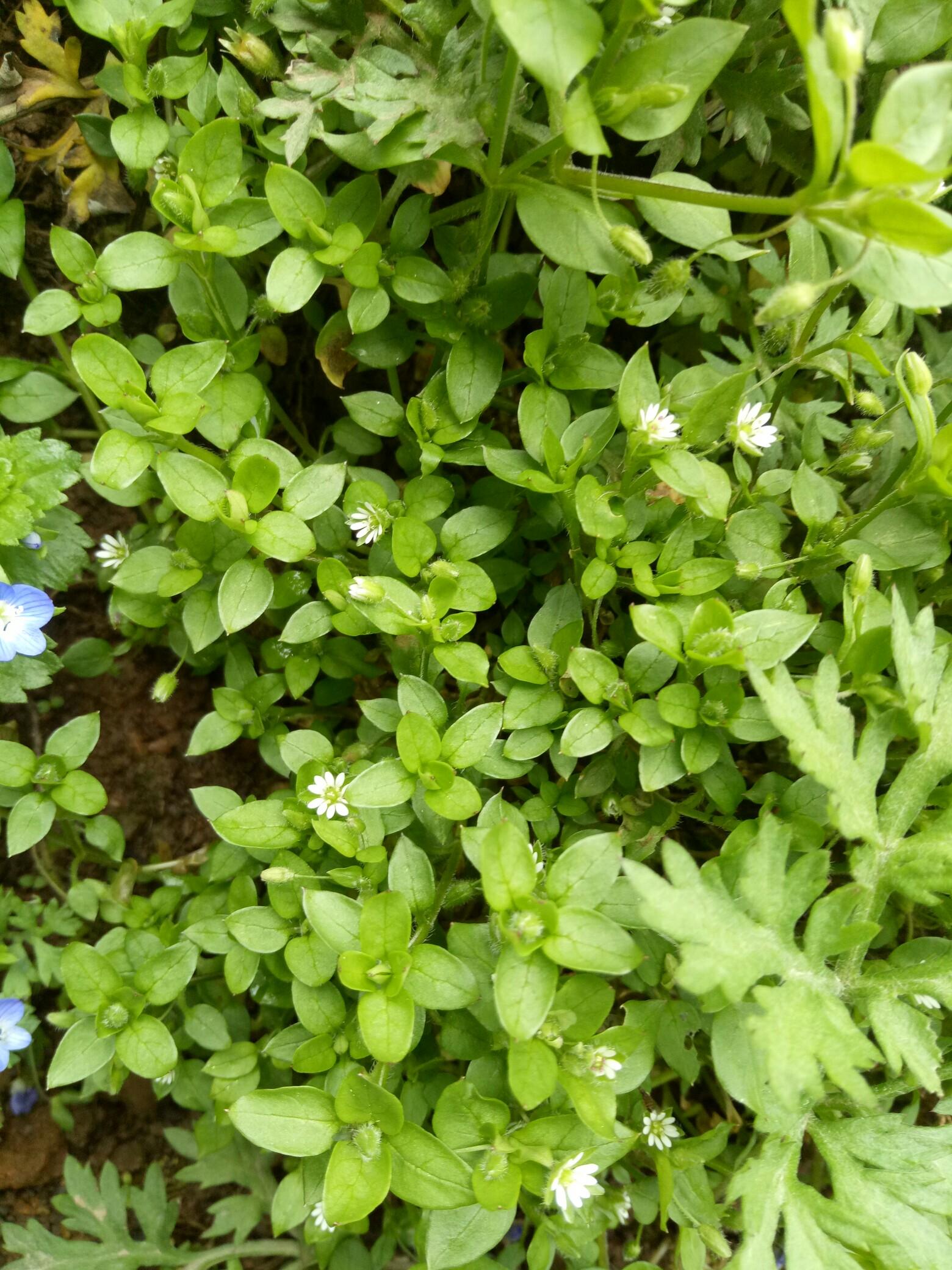 春天的手机壁纸高清-绿色高清护眼图片大全_图片风景