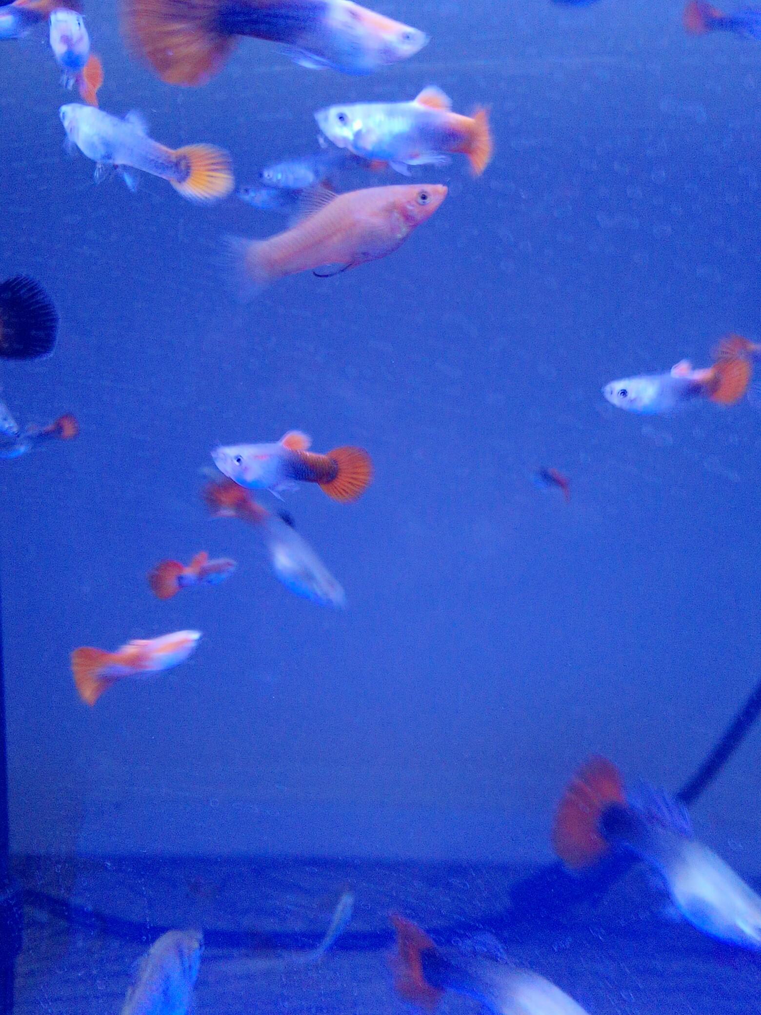 壁纸 动物 海底 海底世界 海洋馆 水族馆 鱼 鱼类 1560_2080 竖版 竖