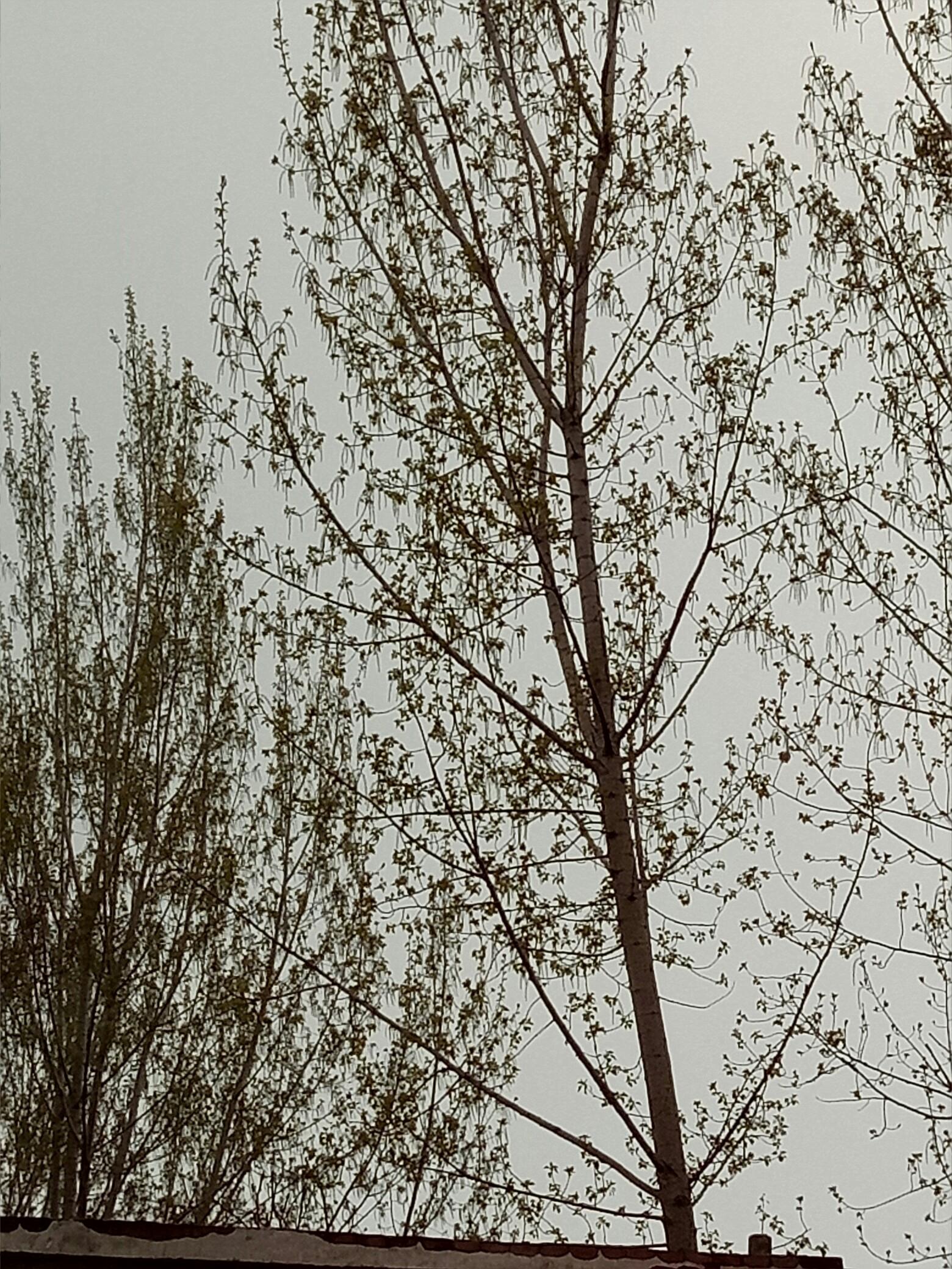 幼儿手工纸板制作小树