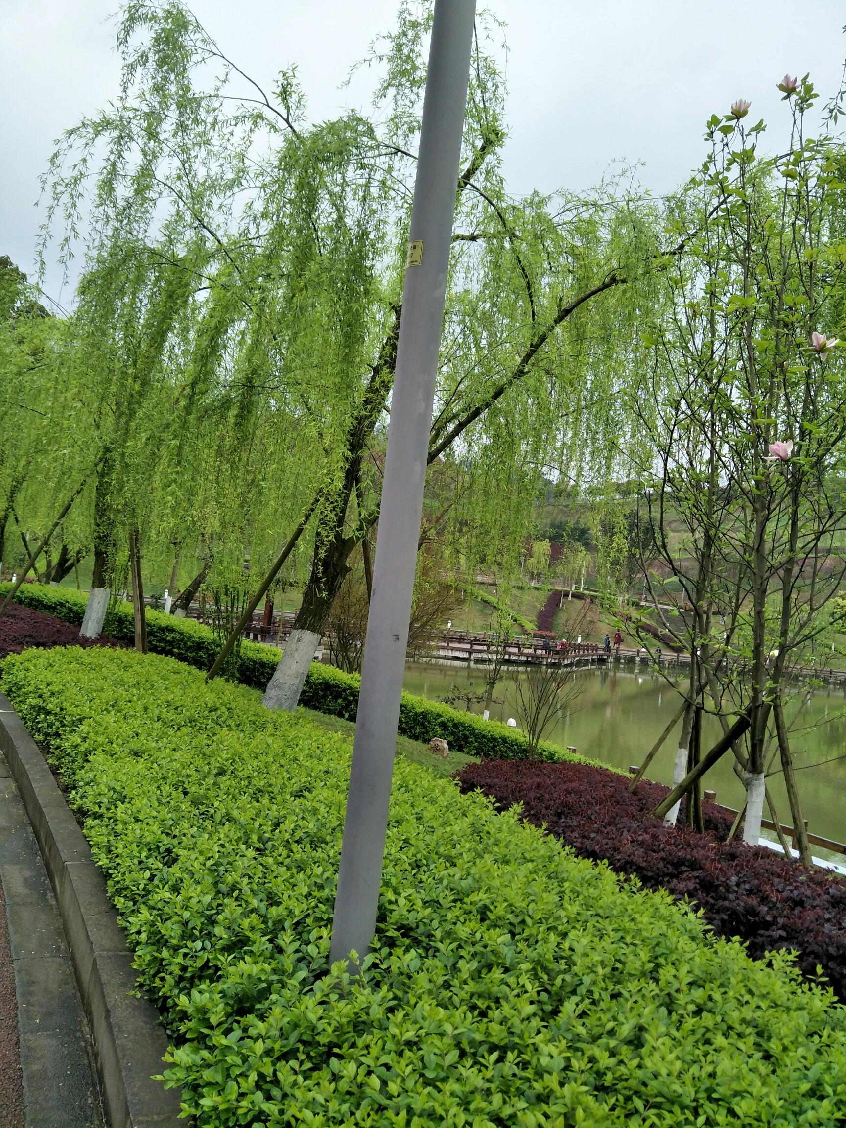 重庆的春天!