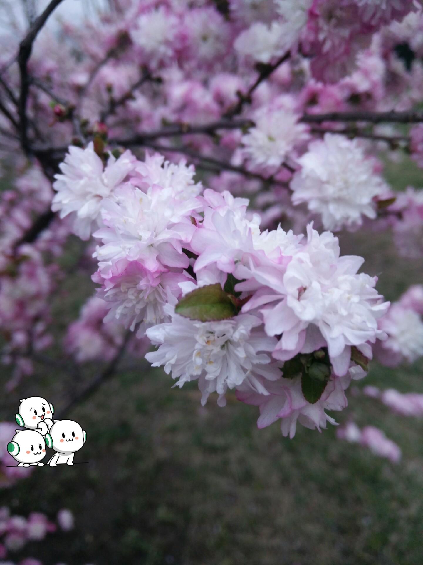 春天的芭蕾二声部简谱图片分享下载