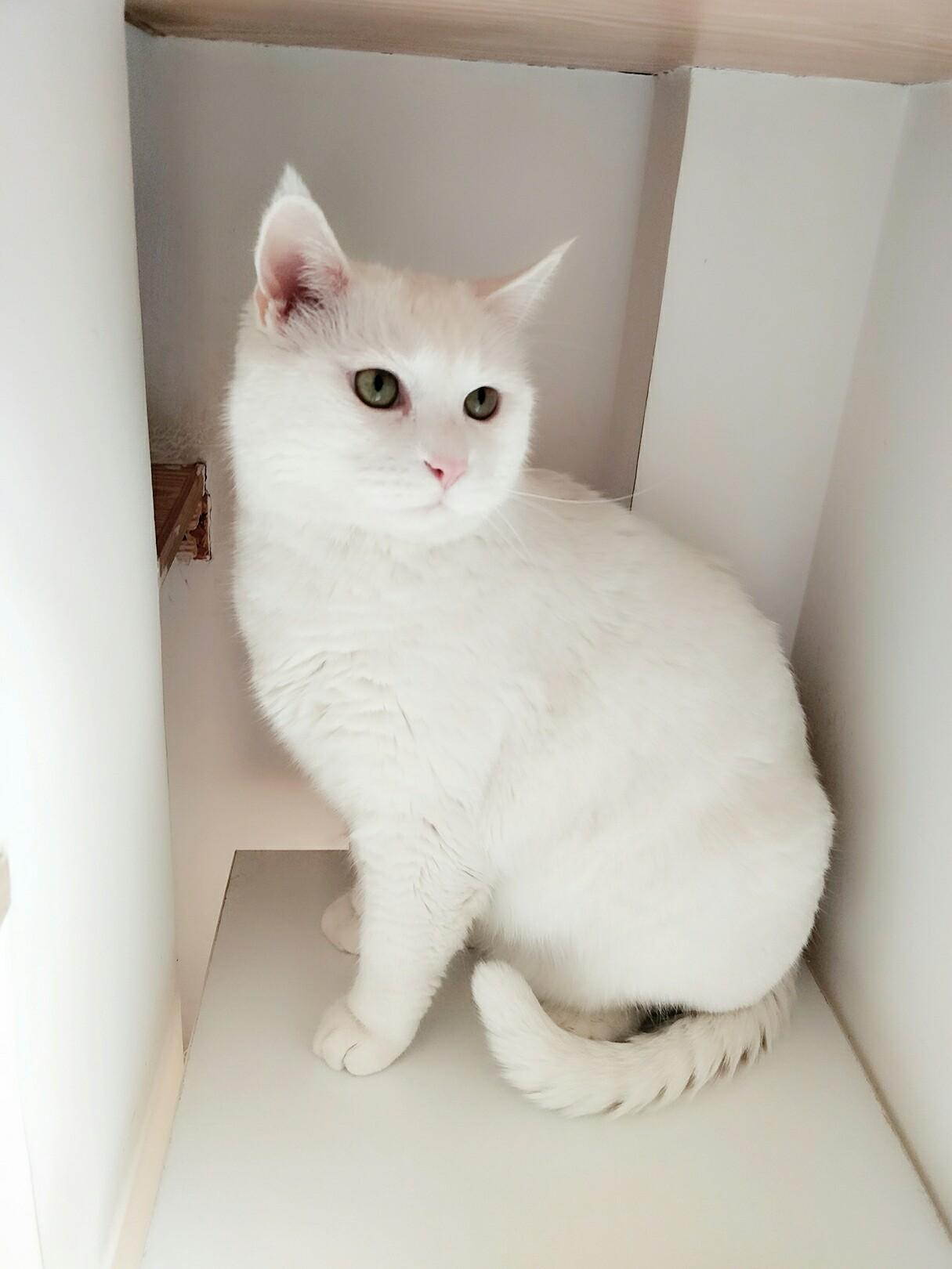 壁纸 动物 猫 猫咪 小猫 桌面 1215_1620 竖版 竖屏 手机
