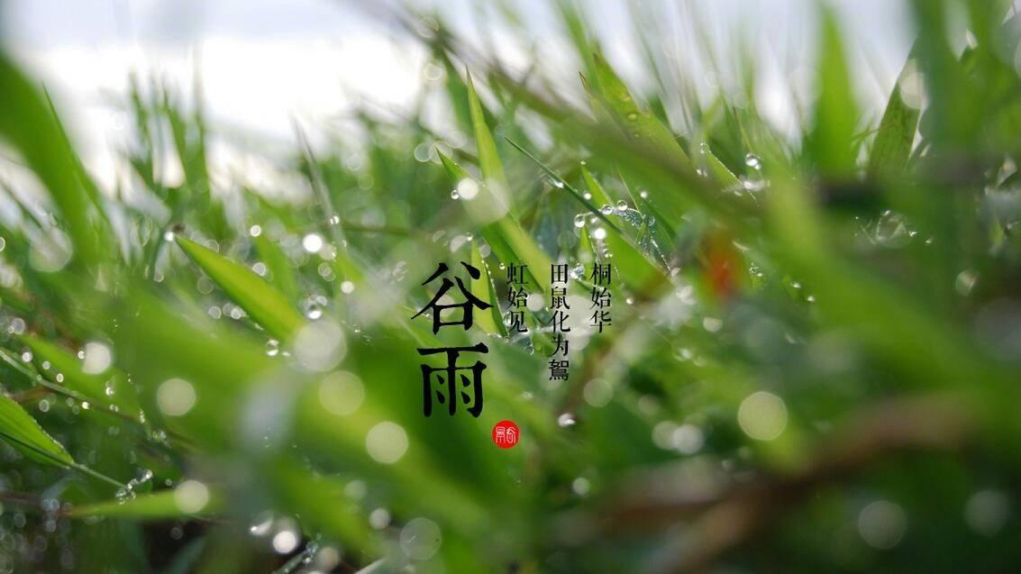 [今日谷雨]杨花柳絮随风飘,雨生百谷夏将至