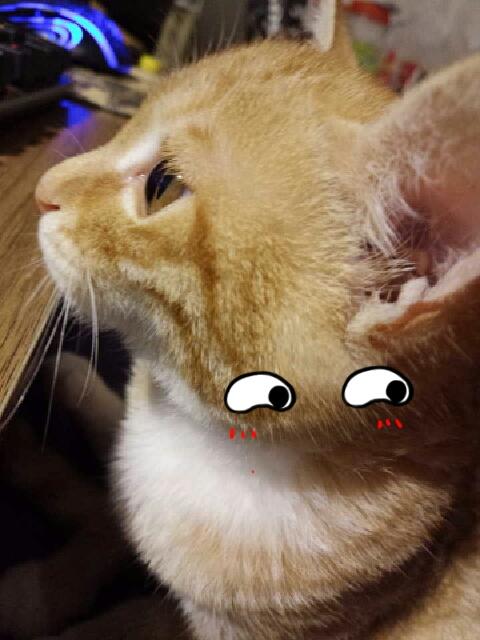 小可爱,我家的爱看电视的喵星人,喵喵喵