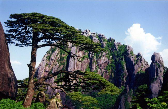 松树风景画图片大全