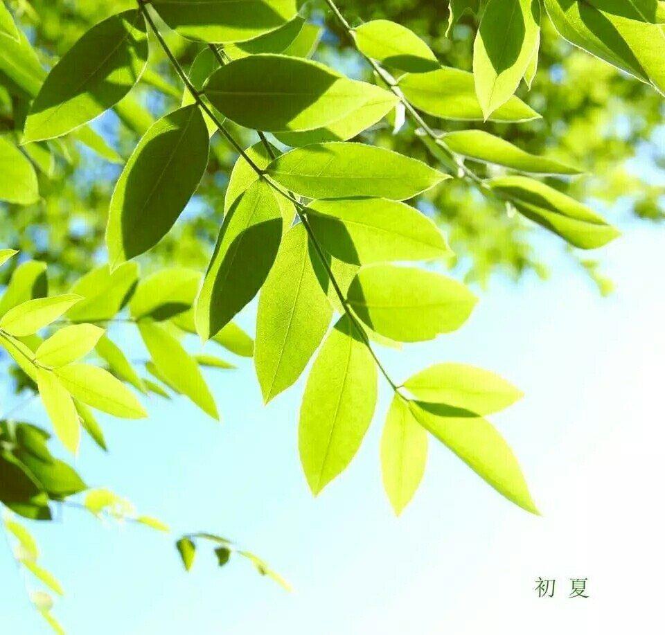浅夏,季节的风,吹过五月的门楣 总是觉得,时间太快,不经意间,又是初夏。 初夏,是春的消瘦。初夏,是夏的始萌。 季节的风,吹过五月的门楣,抬足颔首间,便到了这个阳光明媚,惬意悠然的月份。 五月,浅夏,每个清晨都会令人精神抖擞,心情愉悦。听,鸟儿愉快的在窗外悠闲自得的鸣唱;看,阳光肆意地洒落在早起匆忙的身影上。 我喜欢这样的清晨,喜欢这样明净温馨的阳光,更喜欢这样的时光,不急不慢。 初夏多是雨水,雨后的晴天总是那样清晰和明艳,街上飞扬的裙摆显示着女子的娇媚。 那些色彩斑斓的细花碎裙,在这个还不是炎热的气候