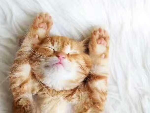 想睡觉了!但是有一点小兴奋!怎么办?