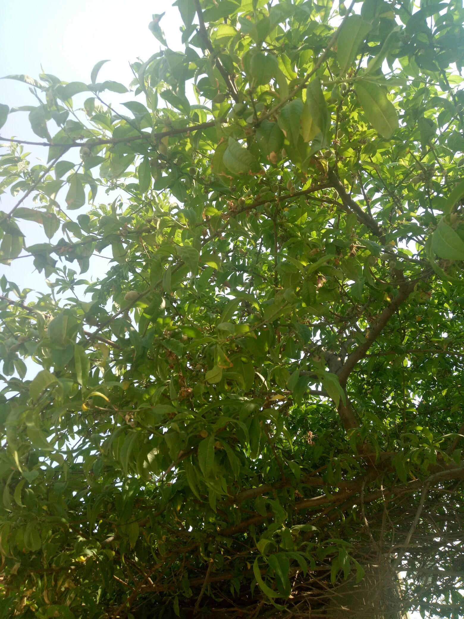果树立面图ps素材