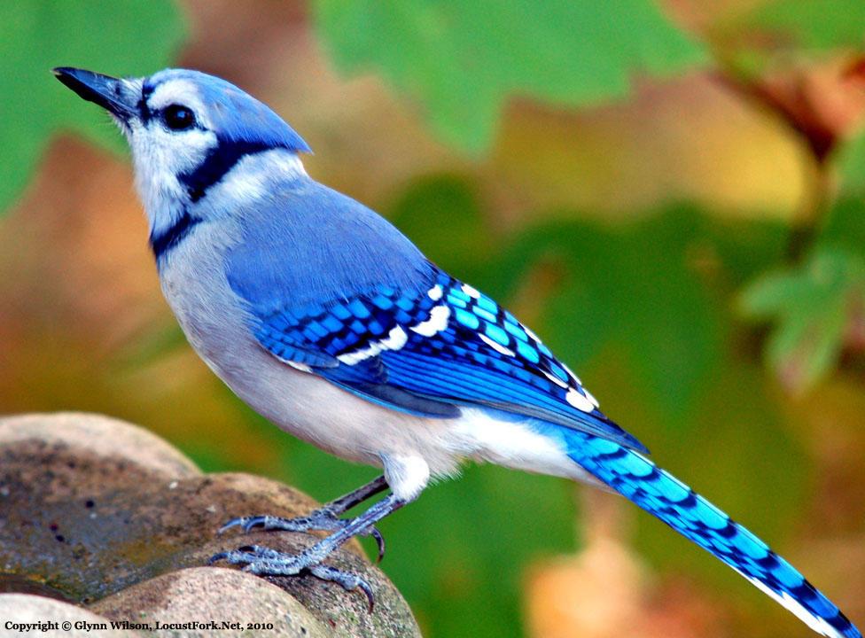 关于最美丽的动物图片