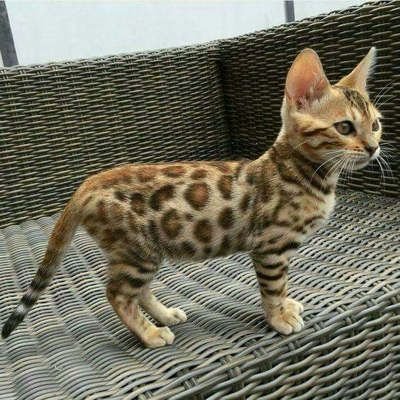 和我一起讨论养小猫咪的小事情吧!