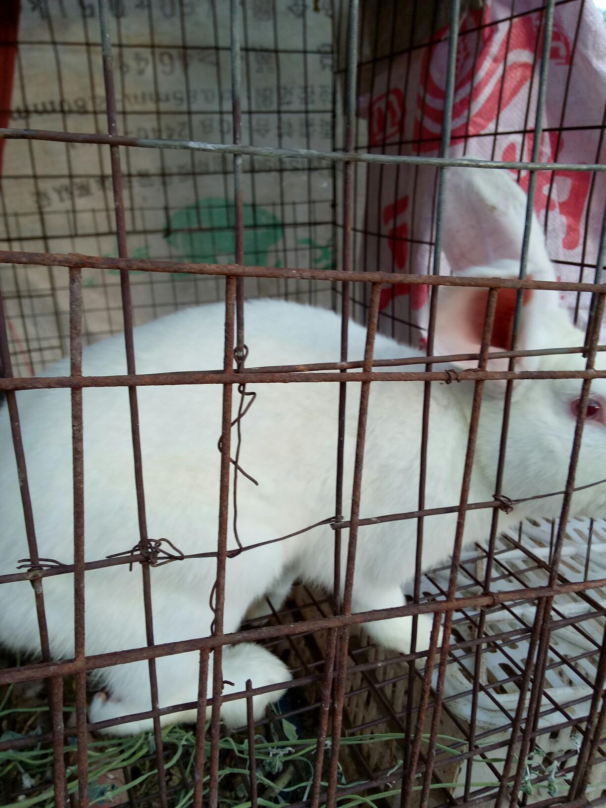 小兔兔多可爱