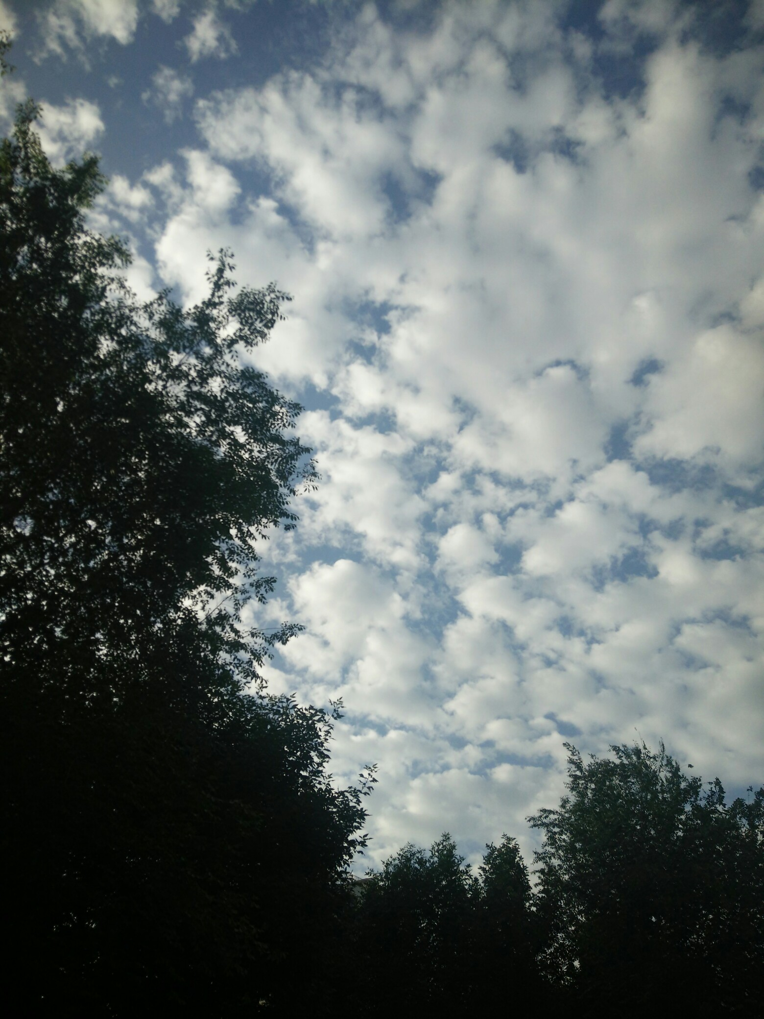 蓝天白云,绿树.