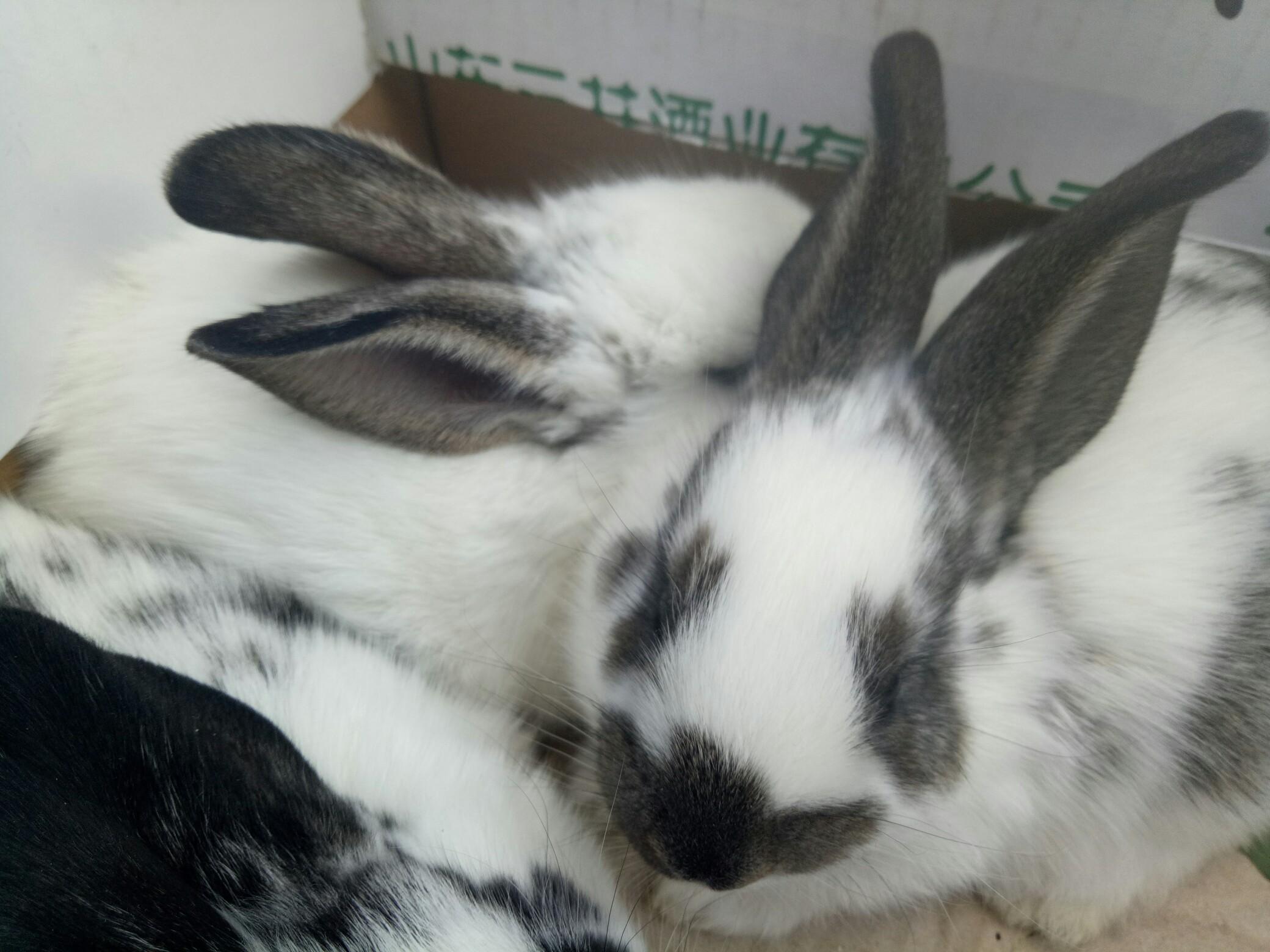壁纸 动物 兔子 2080_1560