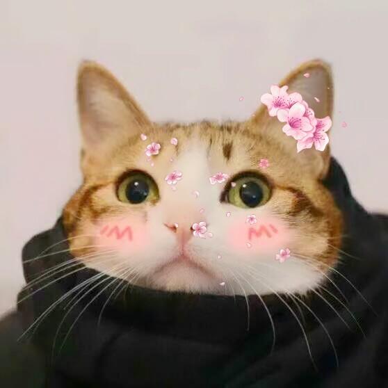 猥琐猫人脸文字表情包 (200_表情大全图片