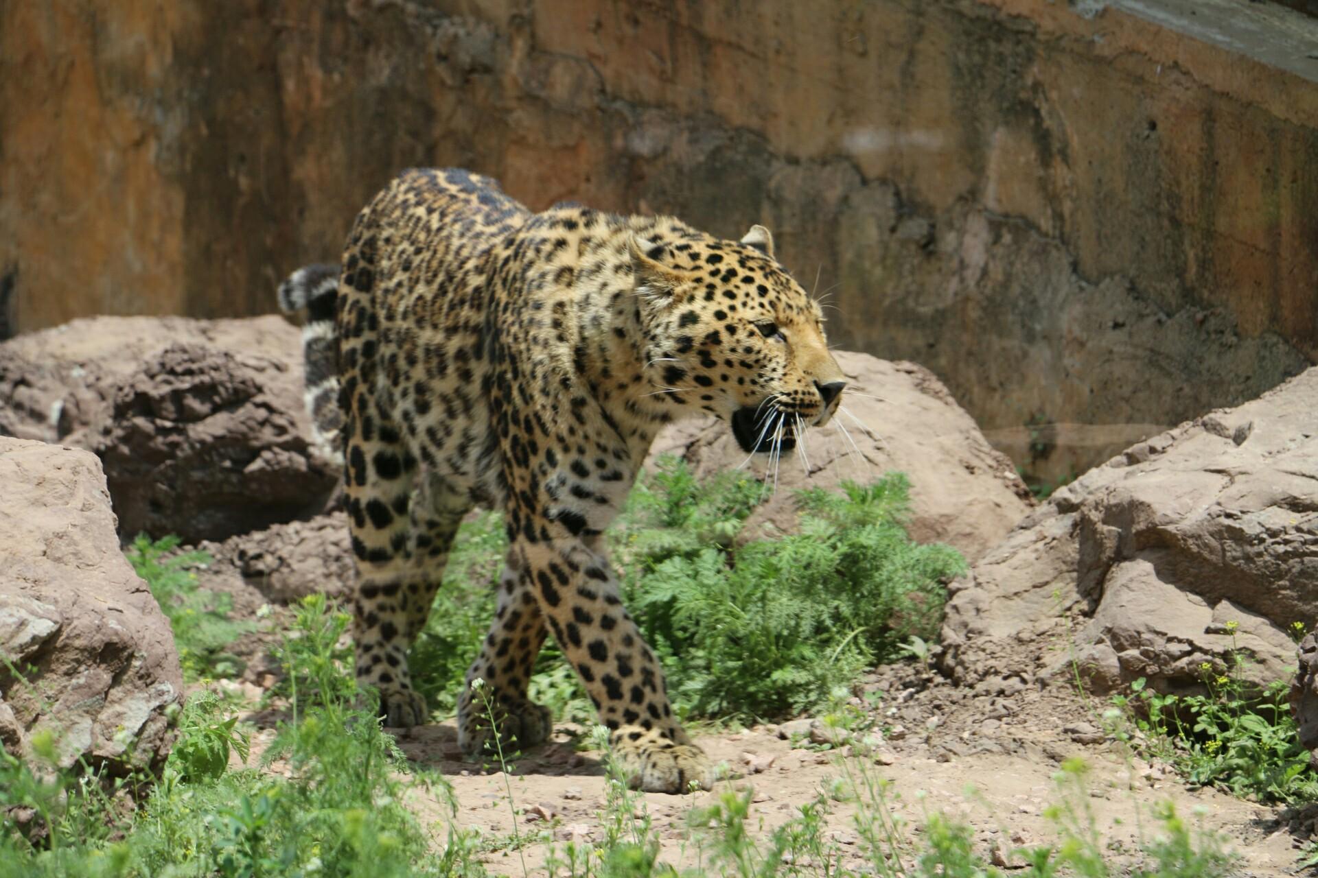 棋盘山野生动物园