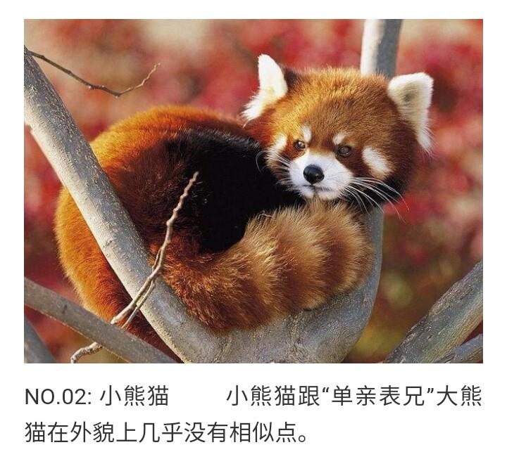 k▽:全球十大最可爱的动物