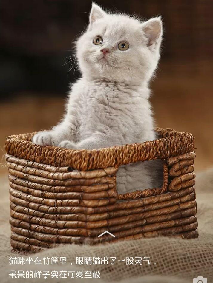 可爱的小白猫!