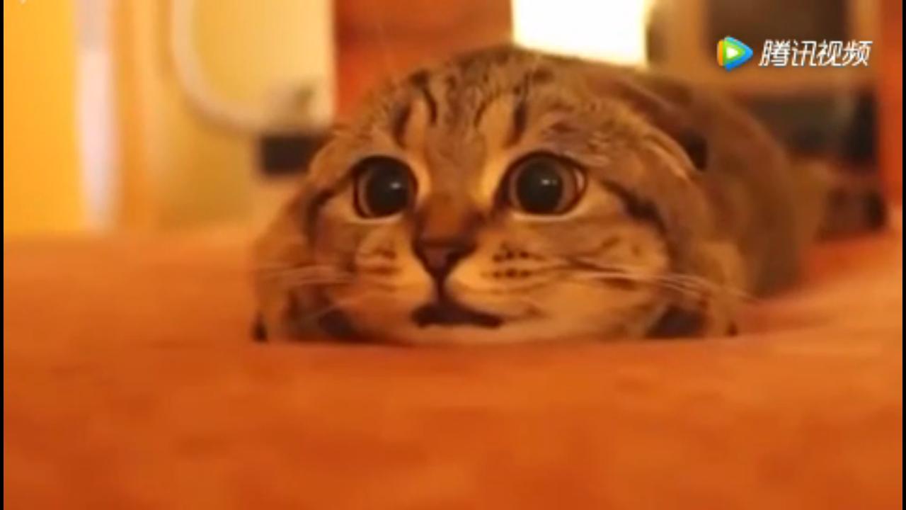 猫咪么么哒表情gif分享展示