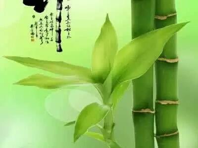 竹子全手工制作龙
