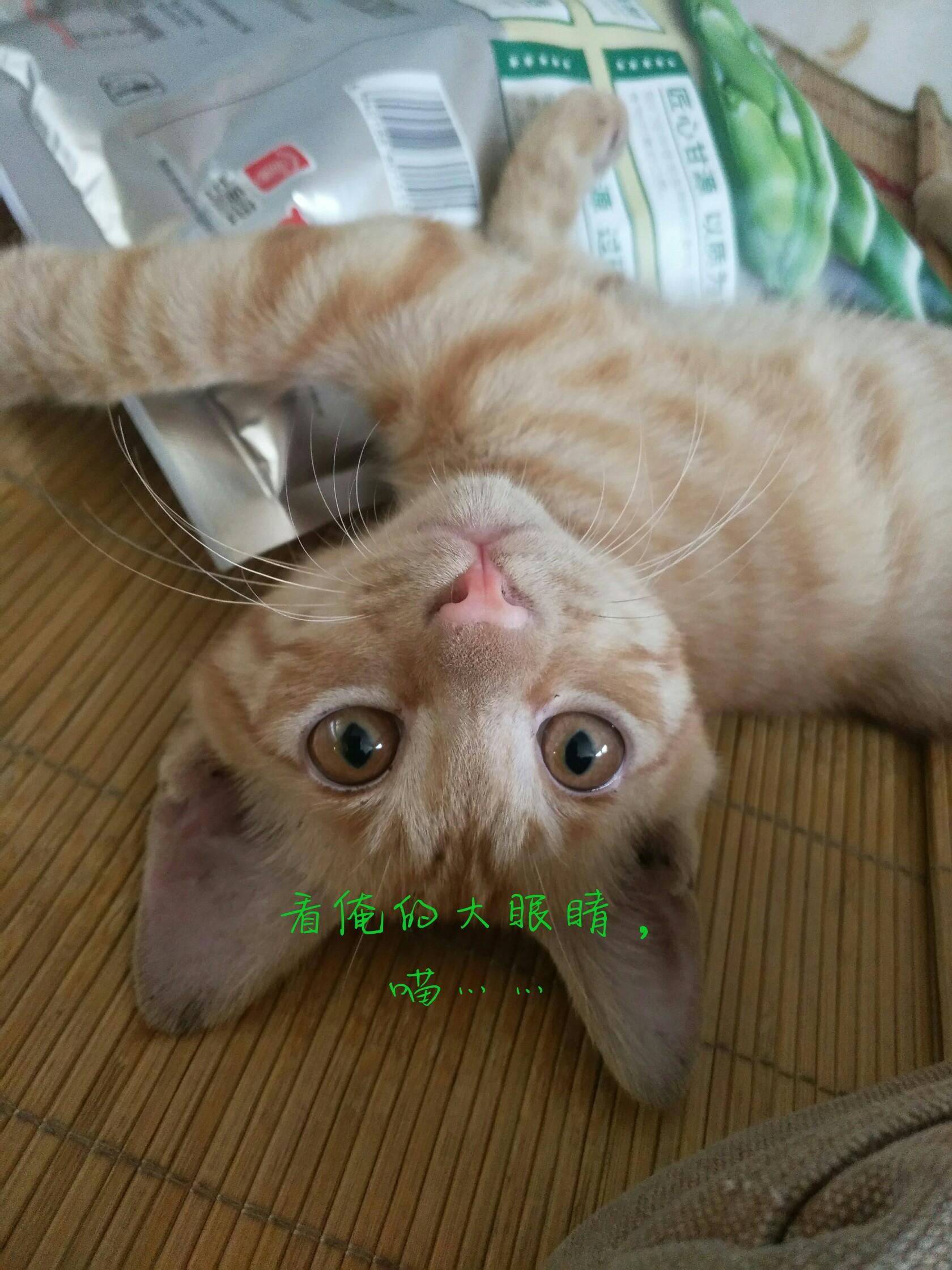 我家的小可爱_帖子_oppo手机官方社区