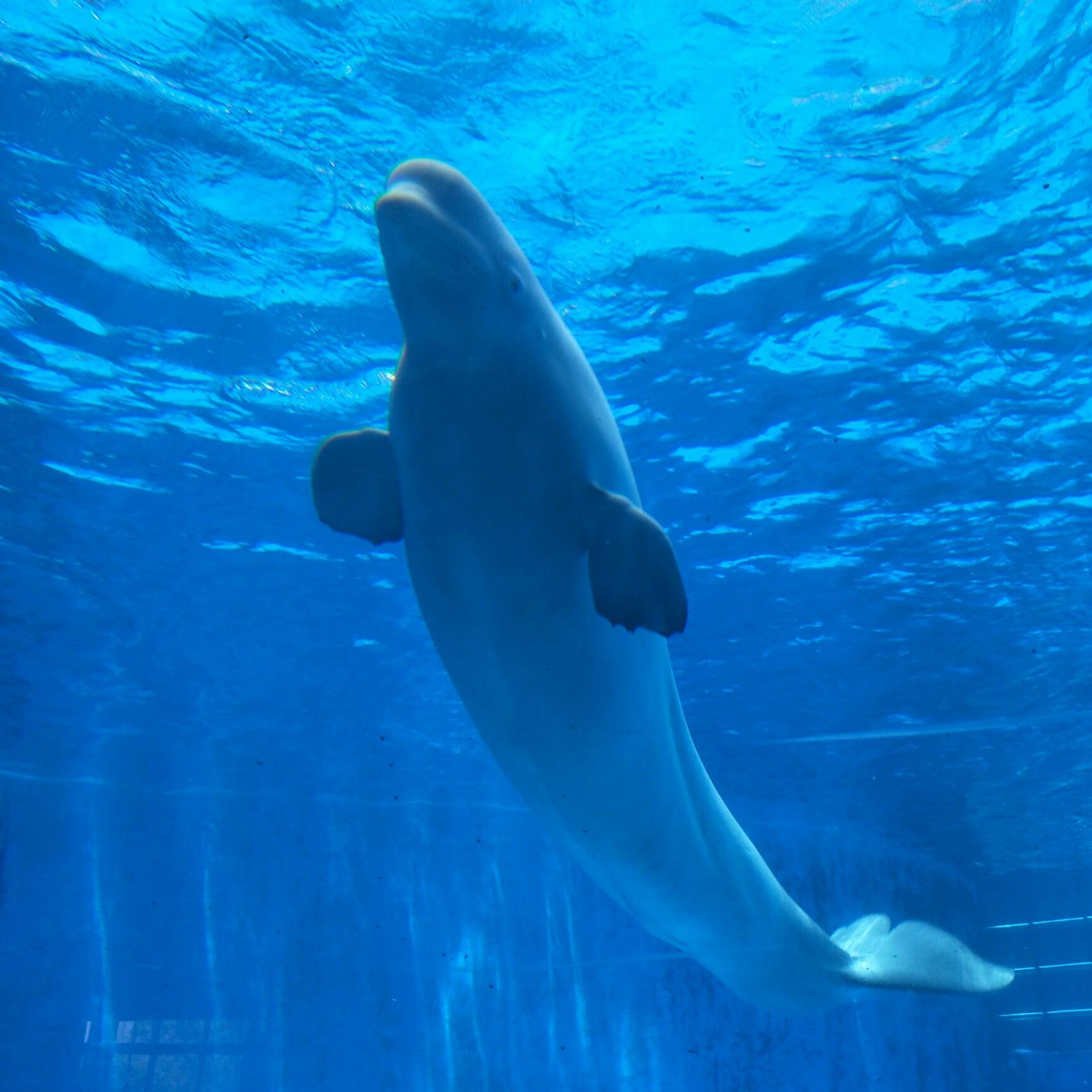 壁纸 动物 海底 海底世界 海洋动物 海洋馆 鲸鱼 水族馆 桌面 1728
