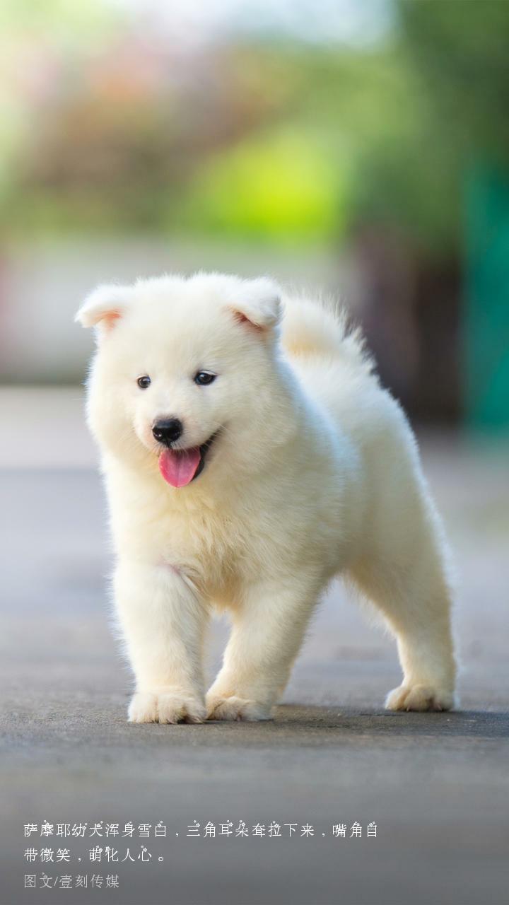 可爱的动物_帖子_oppo手机官方社区