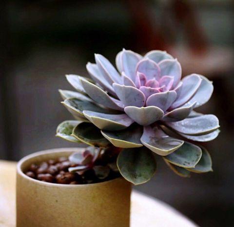 可爱的植物