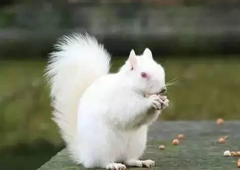 白色小动物很可爱*^o^*